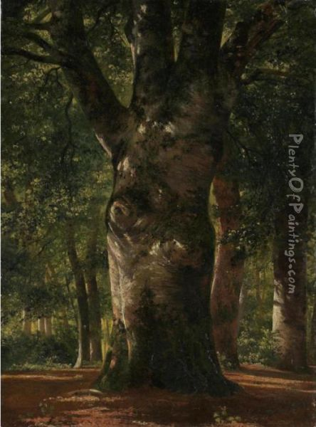 Stem Of A Beech Tree Oil Painting - Alexandre Calame