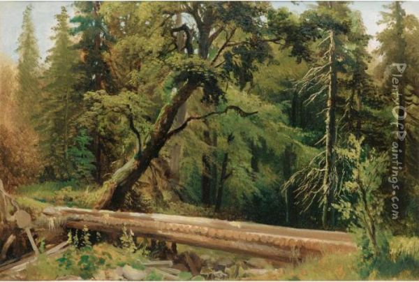 Vue D'une Foret [attributed To Alexandre Calame ; Wooded Landscape ; Oil On Paper] Oil Painting - Alexandre Calame