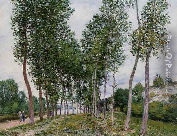 Lane of Poplars on the Banks of the Loing Oil Painting - Alfred Sisley