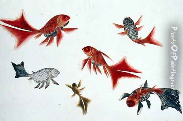 Gold and Silver Fish, from 'Drawings of Fishes from Malacca', c.1805-18 Oil Painting - Anonymous Artist