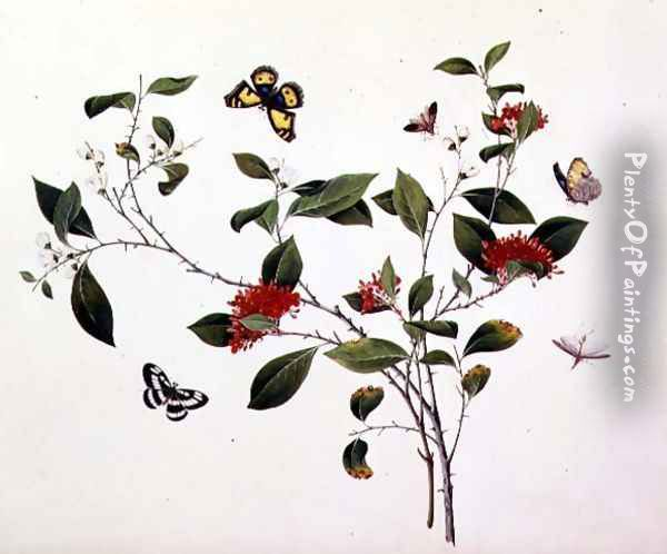 Plant Study with Butterflies and Insects, c.1800 Oil Painting - Anonymous Artist