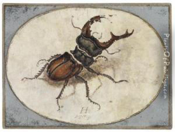 A Stag Beetle Oil Painting - Hans Hoffmann