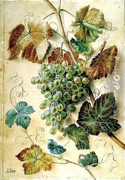 White Grapes Oil Painting - James Sillett