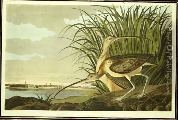 Male and Female Long Billed Curlew (Numenius Americanus) with the City of Charleston behind Oil Painting - John James Audubon