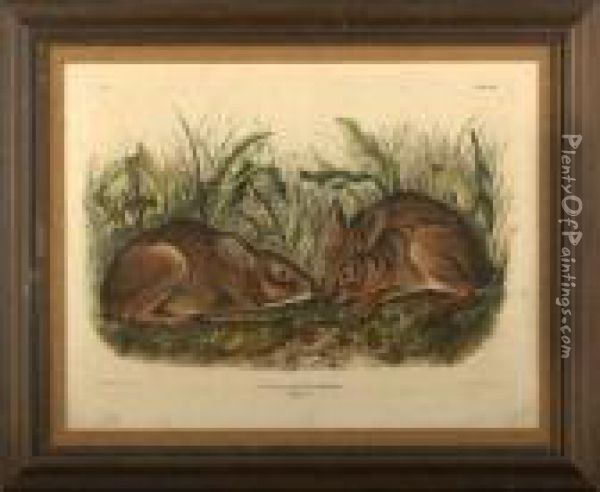 Marsh Hare Oil Painting - John James Audubon