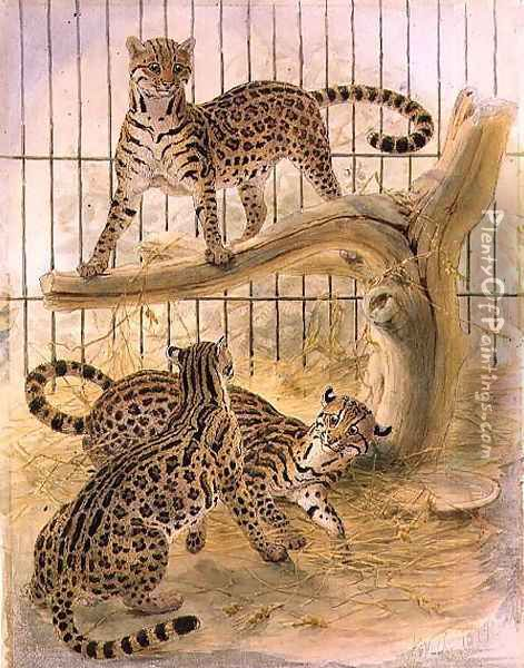 Ocelots in a Cage, 1874 Oil Painting - Joseph Wolf