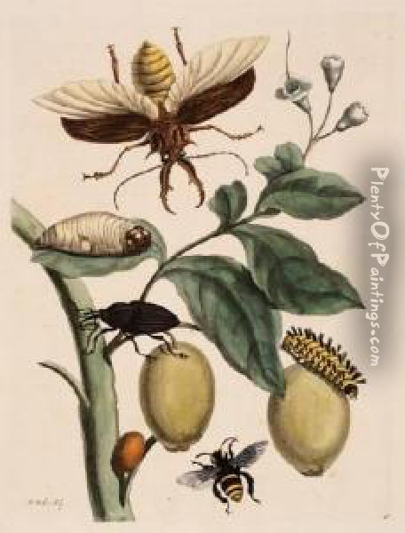 Beetles, Caterpillars And Bee Oil Painting - Maria Merian
