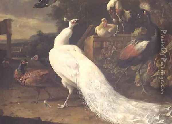 The White Peacock Oil Painting - Melchior de Hondecoeter