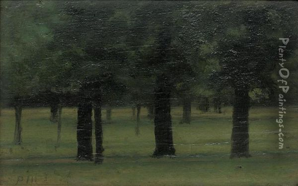 Study Of Trees In Kensington Gardens Oil Painting - Paul Fordyce Maitland