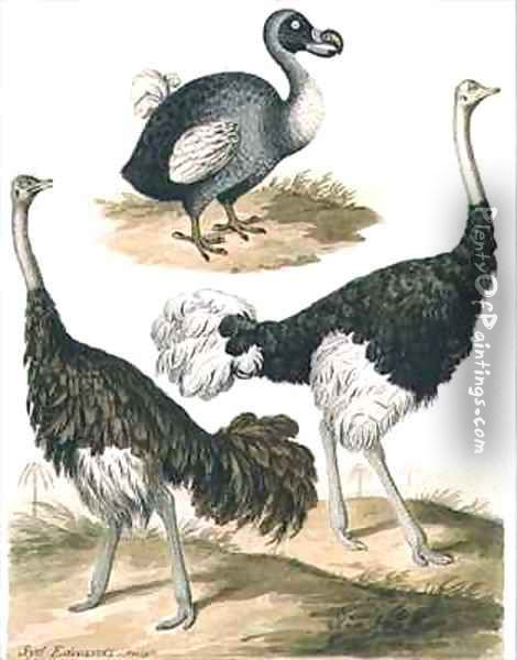 Dodo and Ostrich Oil Painting - Sydenham Teast Edwards