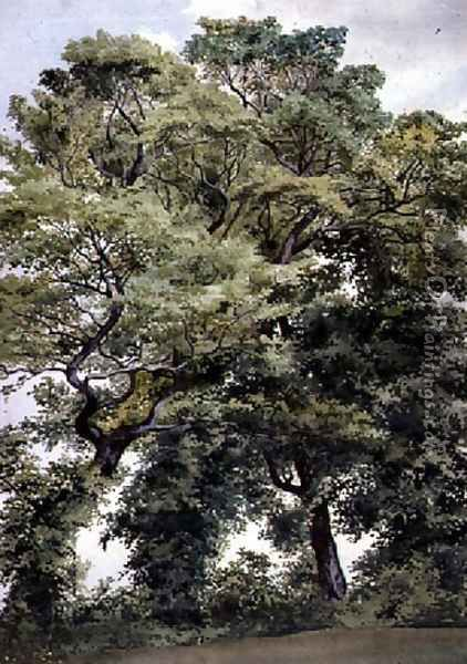 Study of Trees Oil Painting - Thomas Collier