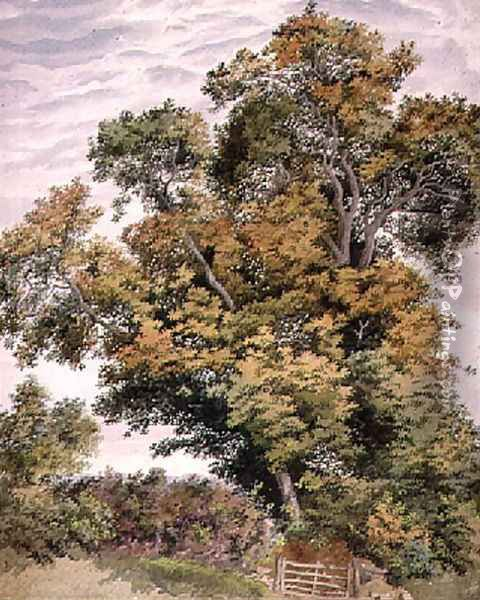 Study of an Oak Tree Oil Painting - Thomas Collier