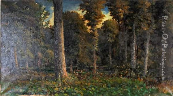 Woodland Interior Oil Painting - William Livingstone Anderson