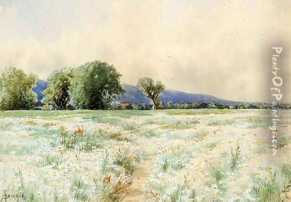 The Daisy Field Oil Painting - Alfred Thompson Bricher